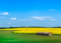 Canola field and hay rolls
