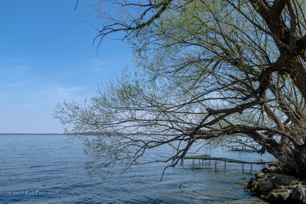 Lake Mendota and a Confused Tree