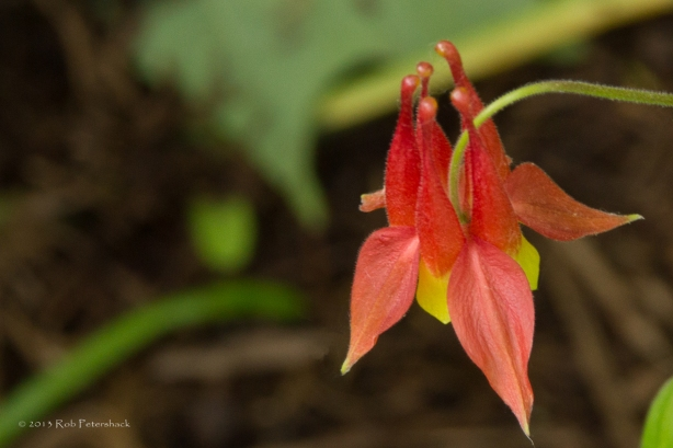 Top Down View - A Columbine