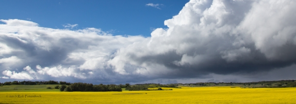 Canola and Thunderhead