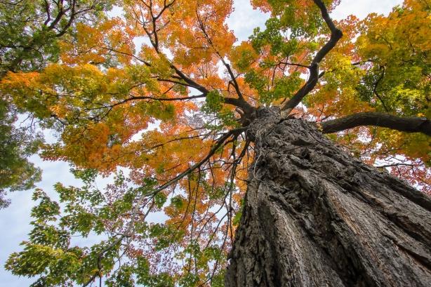 Backyard Tree-6a