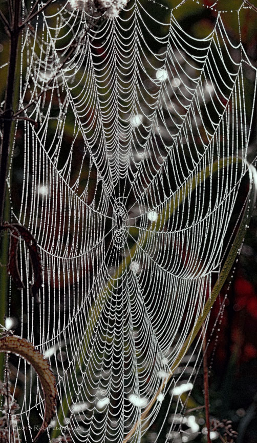 Nature Walk - Spider's Web