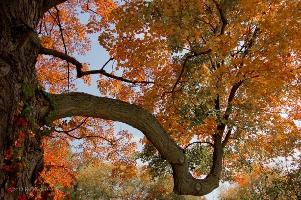 Fall Colors 10-10-11