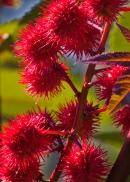 Unkown plant