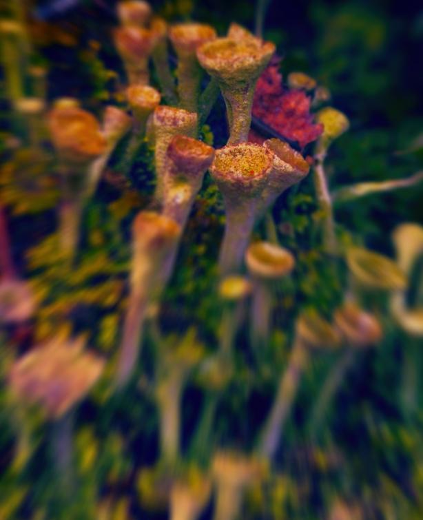 Festive Fungus