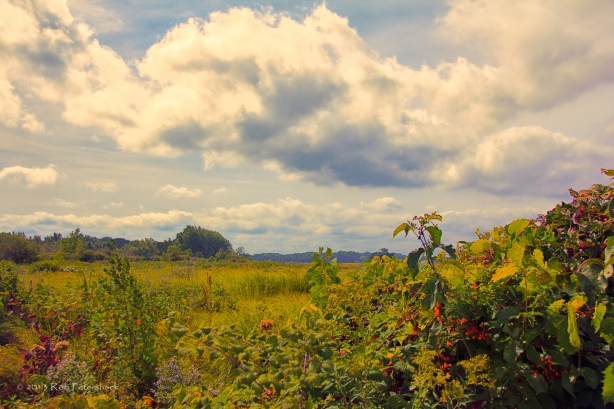 Cherokee Marsh - Fall 2013