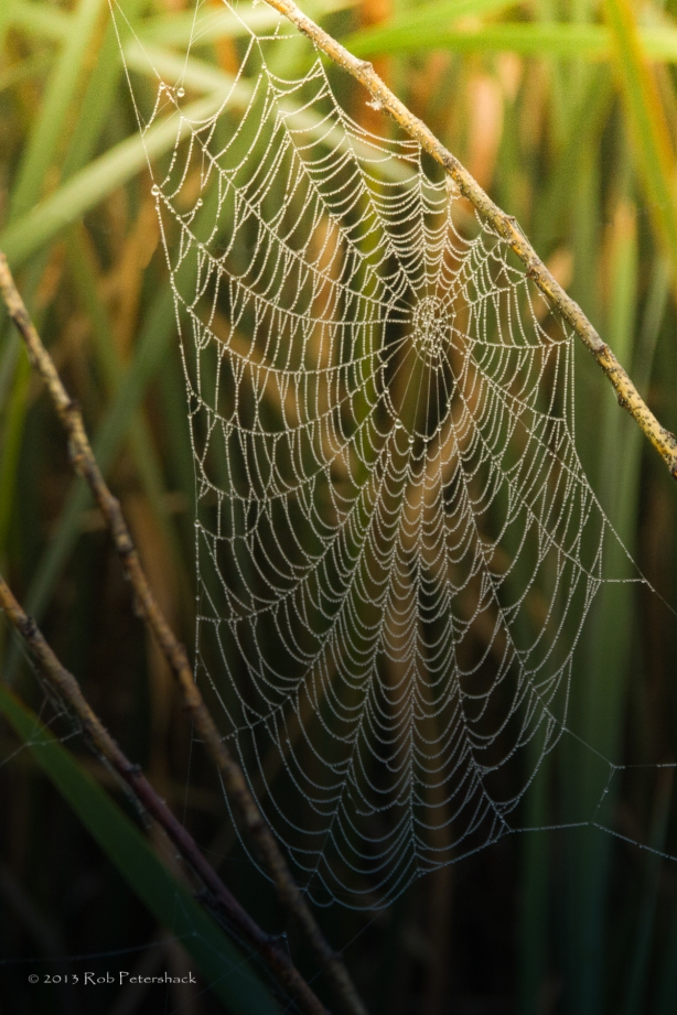 Cherokee Marsh Spider Web 252