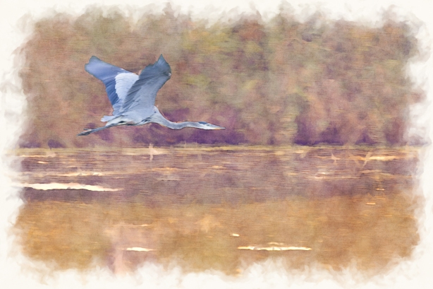 Great Blue Heron - October 02, 2013 - 198-Edit-Edit-3 -2