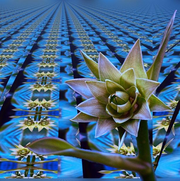 Hosta Flower Infinity