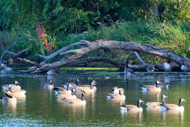 Warner Park - September 30, 2013 - 063_4_5pmatrix-Edit