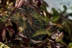 Spider Web 2 - Cherokee Marsh