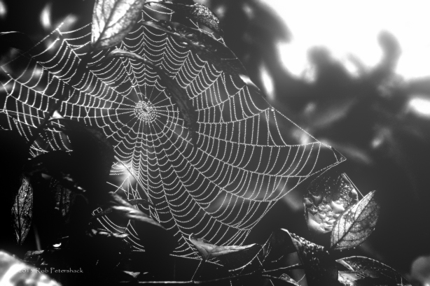 Spider's Web in the Mist
