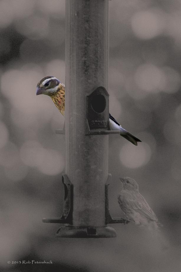 Two birds at the bird feeder