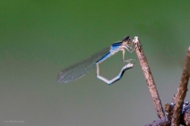 Dragonfly Exercising