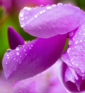 The Colors of Purple4