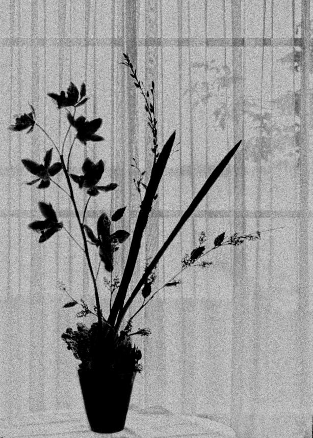 Still Life Silhouette-3