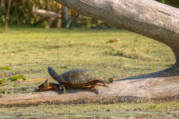 Turtles - September 26, 2014 - 136_7_8pmatrix-Edit-Edit