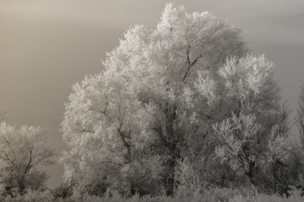 Hoafrost2